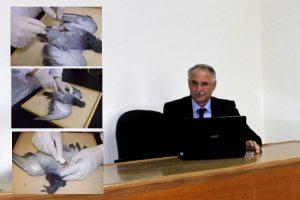تحنيط الطيور (2)